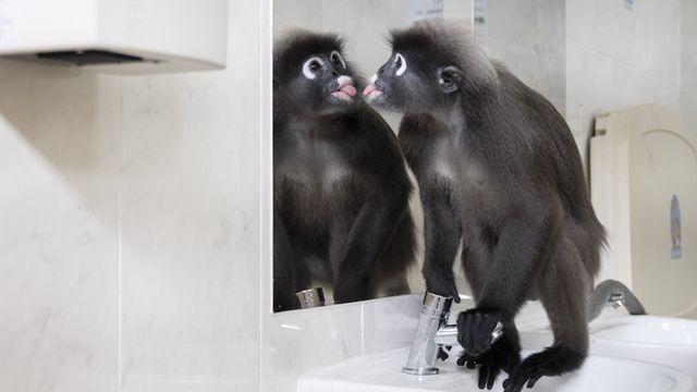 从一猴难求到有价无猴:猴哥身价10万 科研单位直呼用不起